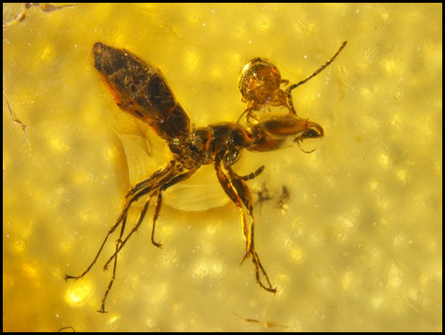 Ant and Mite in Amber