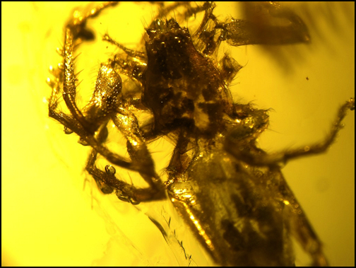 Insect in Amber