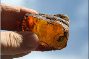 Dominican Amber With Insects
