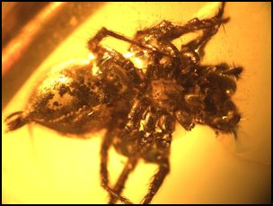 Spider in Dominican Amber