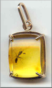 Baltic Amber Jewelry with Fossils Inclusions